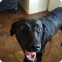 Adopt A Pet :: MIA - Higley, AZ