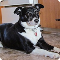 Adopt A Pet :: Maya - Douglas, ON