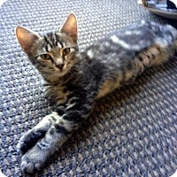 Adopt A Pet :: Rowzy - Chandler, AZ
