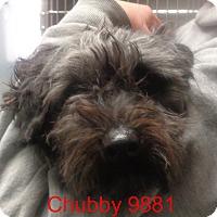 Adopt A Pet :: Chubby - Greencastle, NC