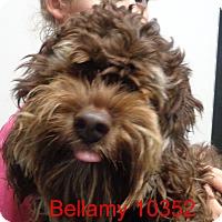 Adopt A Pet :: Bellamy - Greencastle, NC