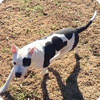 Adopt A Pet :: Joe - Arlington, TN