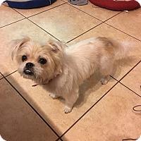 Adopt A Pet :: Bucky - Windermere, FL