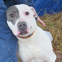 Adopt A Pet :: Benny - Jackson, MO