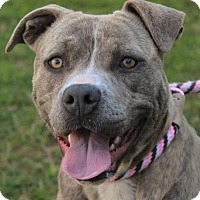 Adopt A Pet :: FANCY:Low fees, spayed - Red Bluff, CA
