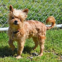 Adopt A Pet :: Delilah (transport sponsored) - Westport, CT