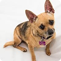 Adopt A Pet :: Lizzy - Cumberland, MD