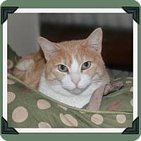 Adopt A Pet :: Kit Kat - Midland, TX