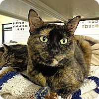 Domestic Shorthair Cat for adoption in Grayslake, Illinois - Lillian