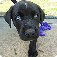 Adopt A Pet :: Spencer - maryville, TN