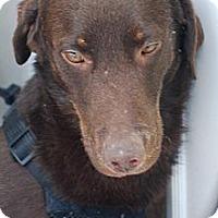 Adopt A Pet :: Brody - Sanford, ME