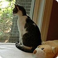 Adopt A Pet :: Cassie - Monroe, GA