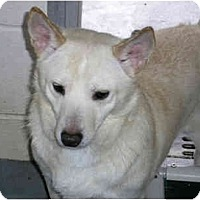 Adopt A Pet :: Stanley - Alexandria, VA