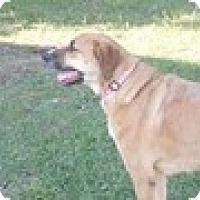Adopt A Pet :: Misho - Camden, SC