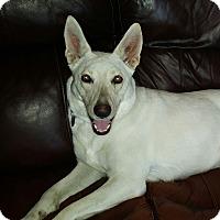 Adopt A Pet :: Mila - Knoxville, TN