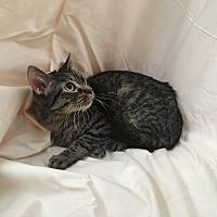 Adopt A Pet :: Peeps - Monrovia, CA