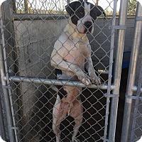 Adopt A Pet :: Boyfriend - Bishopville, SC