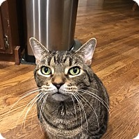 Adopt A Pet :: Twix (COURTESY POST) - Baltimore, MD