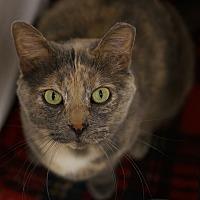 Adopt A Pet :: Bella - Naperville, IL