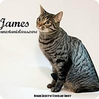 Adopt A Pet :: JAMES - Modesto, CA