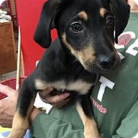 Adopt A Pet :: Boone - Centerville, GA