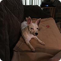 Adopt A Pet :: Dixie - Breaux Bridge, LA