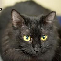 Adopt A Pet :: Tess-13363 - Richardson, TX