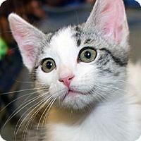 Adopt A Pet :: Rosie - Irvine, CA