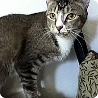 Adopt A Pet :: Jitters - Alexandria, VA