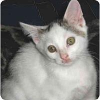 Adopt A Pet :: Mallory - Colmar, PA
