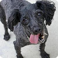 Adopt A Pet :: Darby - Sacramento, CA