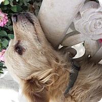 Adopt A Pet :: Cody - Fowler, CA