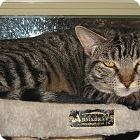 Adopt A Pet :: Julie - Bulverde, TX