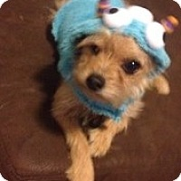 Adopt A Pet :: Yoshi (Courtesy Listing) - Scottsdale, AZ