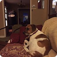 Adopt A Pet :: Grace - Marietta, GA