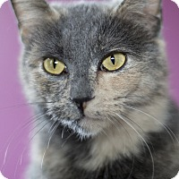 Adopt A Pet :: Holiday - Chicago, IL