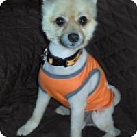 Adopt A Pet :: Nadja - Salem, OR