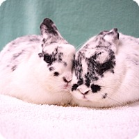 Adopt A Pet :: Lucy & Giselle - Fountain Valley, CA
