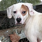 Adopt A Pet :: Barron