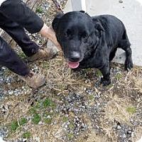 Adopt A Pet :: Badger - Midlothian, VA