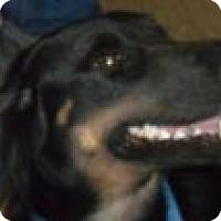 Adopt A Pet :: Smutt - Grand Saline, TX