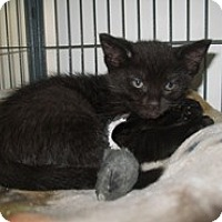 Adopt A Pet :: Howie - Shelton, WA