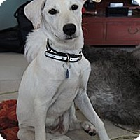Adopt A Pet :: Apple - Temple City, CA