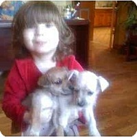 Adopt A Pet :: Snowy - Wakefield, RI