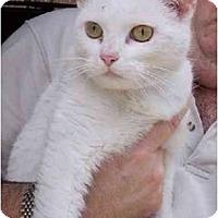 Adopt A Pet :: Moon - Summerville, SC