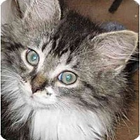 Adopt A Pet :: Owen - Warren, OH