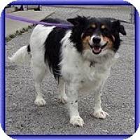 Adopt A Pet :: Biggum (URGENT) - Staunton, VA