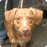 Adopt A Pet :: Spencer - Greencastle, NC