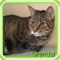 Adopt A Pet :: GRENDEL - 2015 - Hamilton, NJ