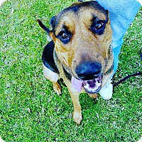 Adopt A Pet :: Gunta - Large breed puppy! - Los Angeles, CA